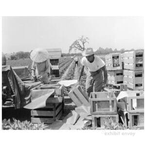 Farm workers stand amongst empty wooden crates in a field.