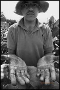 Manuel Garcia, a farm worker from Esteli, Nicaragua, shows the juice from trimming tobacco plants on his hands and arms / Manuel García, un trabajado agrícola de Estelí, Nicaragua, muestra sus manos y brazos manchadas de jugo por recortar las plantas de tabaco.